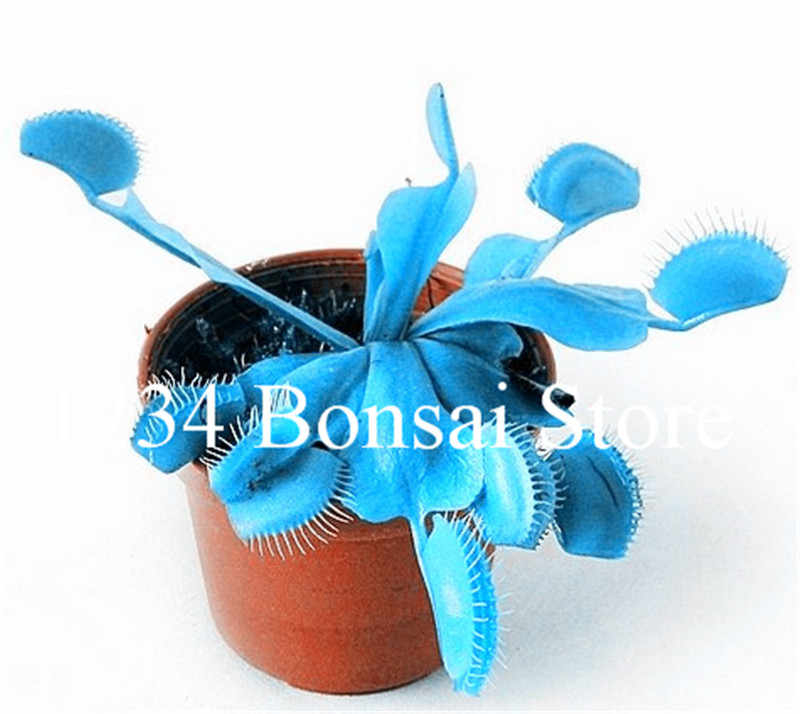 2018 Chegada Nova! 200 pcs Mixed Família das Gramíneas Cordyceps Alimentos plantas Estranhas Magia Planta Insetívora Flytrap bonsai planta