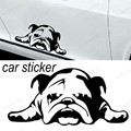 2016 NEW design English Bulldog Tired puppy Dog Rescue Vinyl sticker  for Car window decal Truck Bumper wall removable