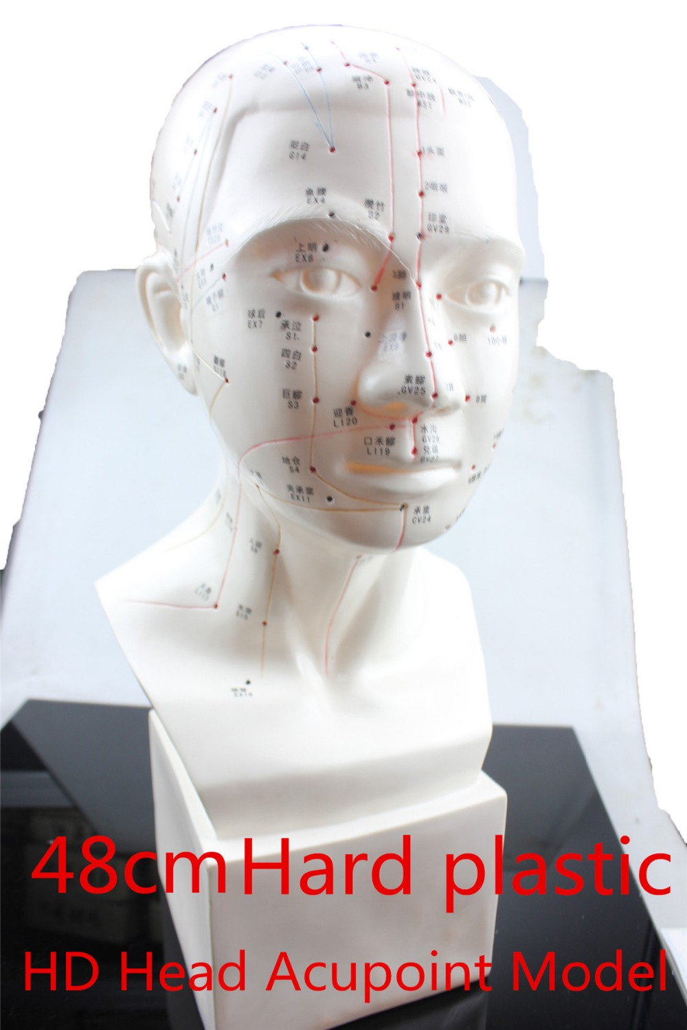 HD Head acupuncture model 48cm high definition face Facial Acupoint Acupuncture point model Head acupuncture teaching Hard model