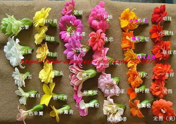 Promotion!Bonsai Red Longevity Flower Seeds Kalanchoe Novel Plants for DIY Home Garden 100 Particles / pack