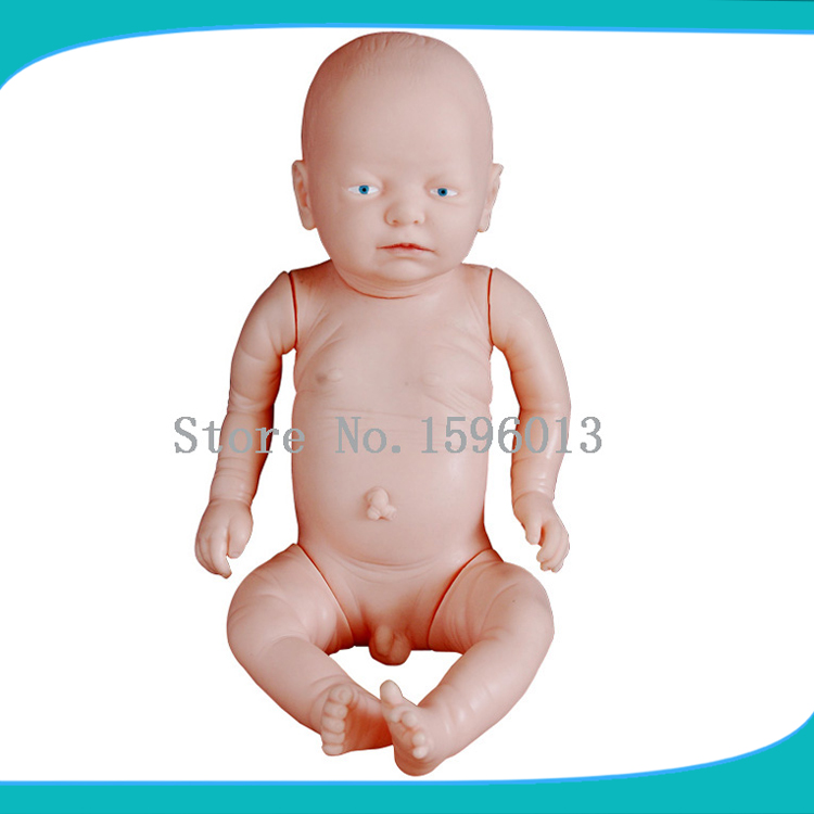 HOT SALES Newborn baby model, Primary fetal model female pelvic fetal model nine months of pregnancy fetus uterine embryo development model fetal development model gasen sz017
