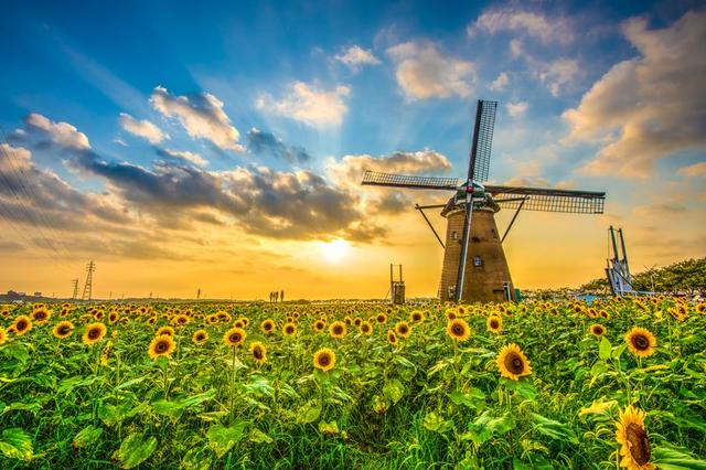L004 Field Sunflowers Sunset Mill Landscape Poster Canvas Art Printing For Home