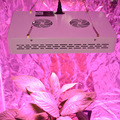 MarsHydro LED Grow Lights 600W  Full Spectrum ,Hydroponics Lamp with Biggest Yields
