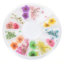 12 Colors Real Natural Petal Dried Dry Flower Tips 3D Nail Art Wheel Decoration Nail Jewelry For UV Gel beauty Manicure Tools 12 colors box 3d real dried dry flower rhinestone storage box nail art decoration uv gel polish stickers manicure tips decals