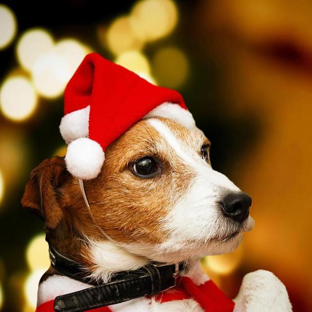 Зимняя собака красный Санта Клаус Рождество шапки теплые шапка для щенка кепки с мячом плюшевые тканевые головные уборы для щенка кошка рождество поставки