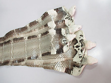 real whole piece Genuine Snake raw skin Leather material natural color with head