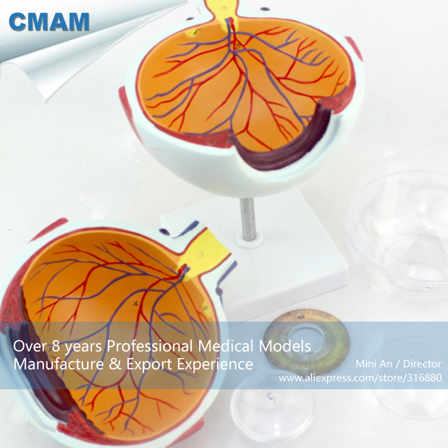 12525 / CMAM-EYE01 Oversize 6x Life Size Human Anatomy Eyeball Model,  Medical Science Educational Teaching Anatomical Models12525 / CMAM-EYE01 Oversize 6x Life Size Human Anatomy Eyeball Model,  Medical Science Educational Teaching Anatomical Models