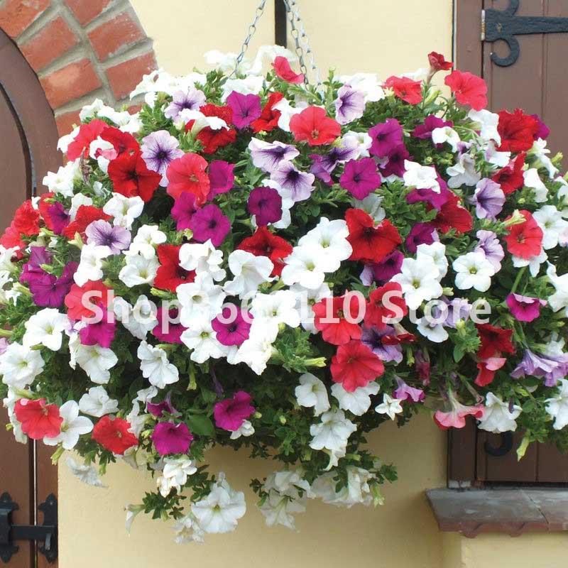 100pcs/bag Seedsplants Outdoor Petunia Flower Garden,Petunia Night Sky Flower,bonsai Flower Plantas,plant For Balcony And Yard