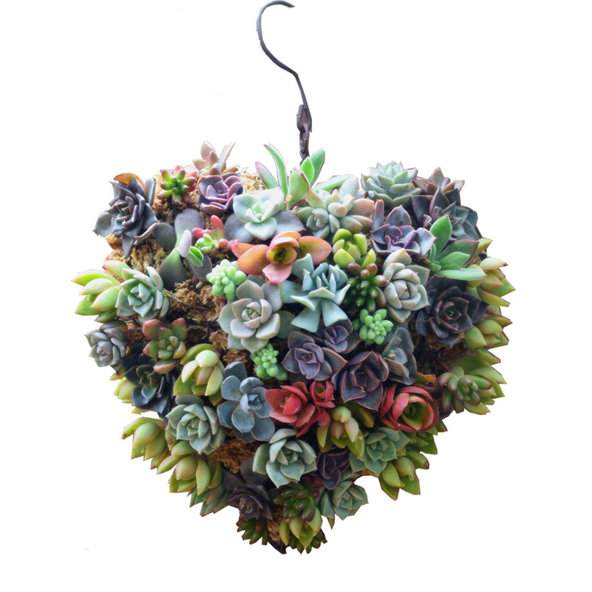 line Get Cheap Flower Hanging Basket Aliexpress