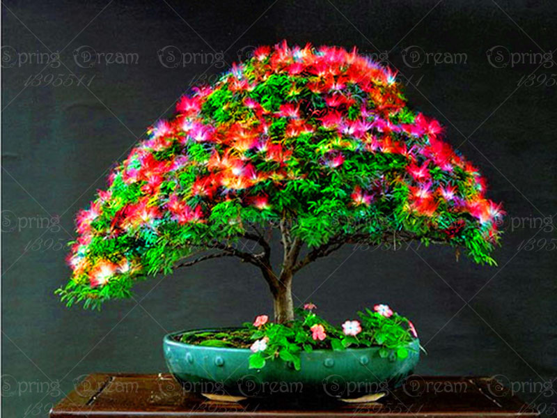 11.11 50pcs/bag Bonsai Albizia Flower Seeds Mimosa Seeds long flowering Tree bonsai tree seeds for potted plants home garden