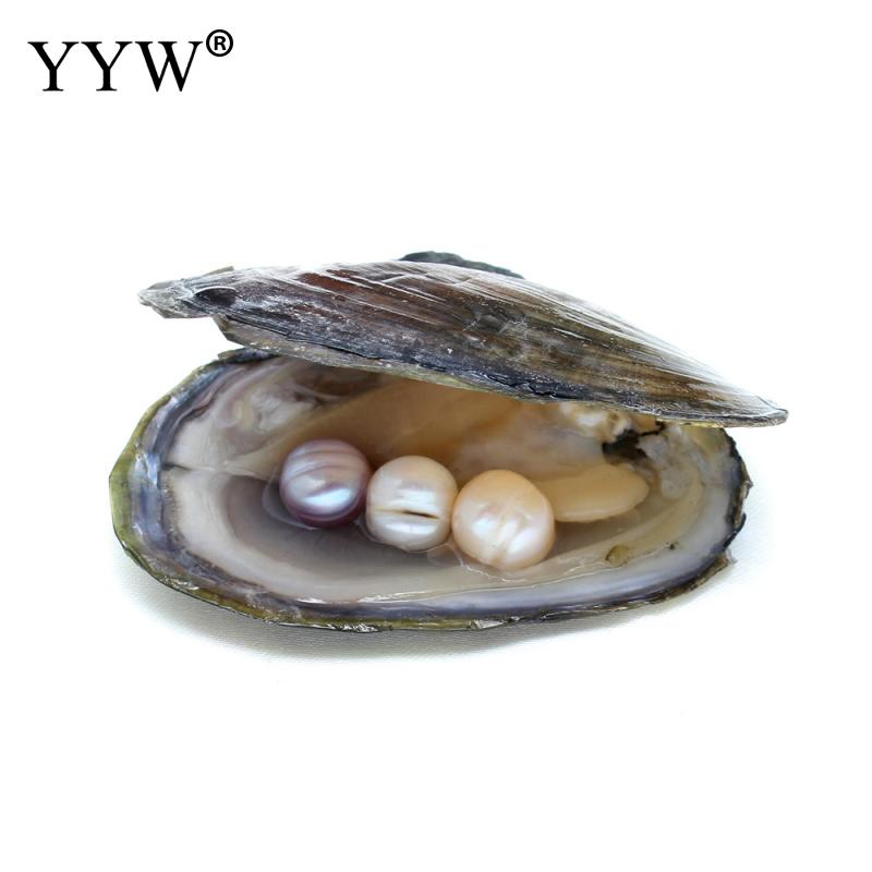 Freshwater Vacuum pack Oyster Wish Pearls, Pearl Mussel ...