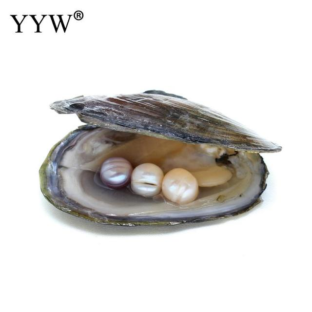 Freshwater Vacuum Pack Oyster Wish Pearls Pearl Mussel Shell With Inside One