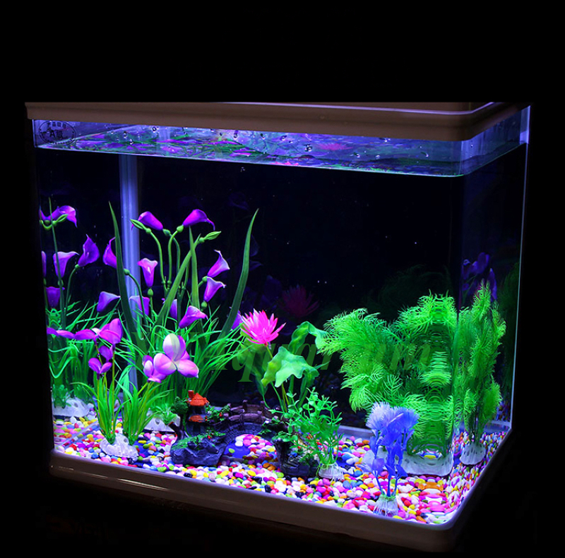 White rock aquarium 1000 aquarium ideas for Fish tank pebbles