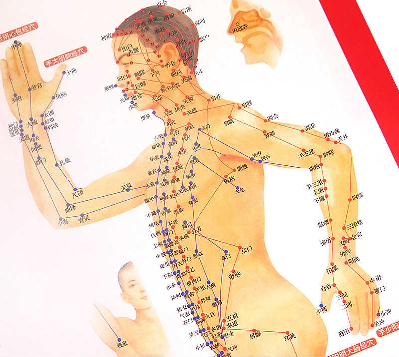 Standard Meridian Acupuncture Points Chart and ZhenJiu ...