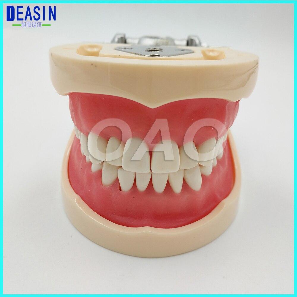 Modèle dentaire standard for32 dents Type d'enseignement dents amovibles modèle d'apprentissage étudiant dentiste