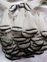Wholesale perfect 20pcs high quality natural Lady Amherst Pheasant Feathers 2-4inch/5-10cm Decorative diy