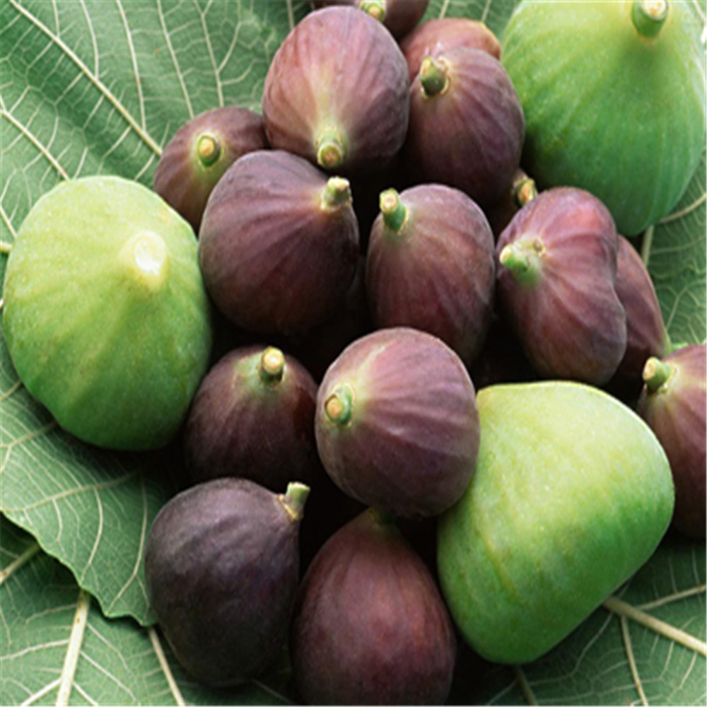 400g 100% Natural Common Fig Extract 100% natural griffonia seed extract 20% 5 htp