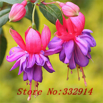 popular flower chinese lanternbuy cheap flower chinese lantern, Beautiful flower