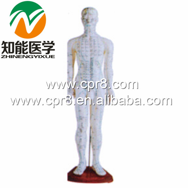 BIX-Y1006 Standard Acupuncture Model (Male) 60CM Australia Freight Free, AU Freight Free, Japan Freight Free, JP Freight Free bix y1005 standard anatomical acupuncture model 60cm