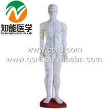 BIX-Y1006 Standard Acupuncture Model (Male) 60CM Australia Freight Free, AU Freight Free, Japan Freight Free, JP Freight Free