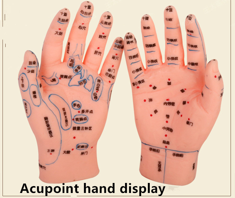Human hand model human acupuncture model hand massage model hand acupuncture model acupuncture hand reflex zone 22cm head acupuncture point model head acupuncture four function model acupuncture model