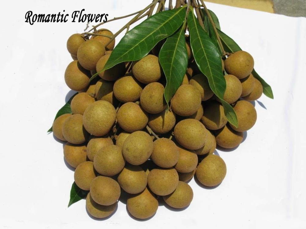 semillas frutas exoticas