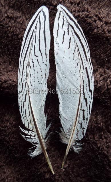brand new 98697 cc9bf 8-10 polegadas (20-25 cm) PRATA Faisão Penas de Cauda NATURAL, prata Faisão  Caudas, penas natureza