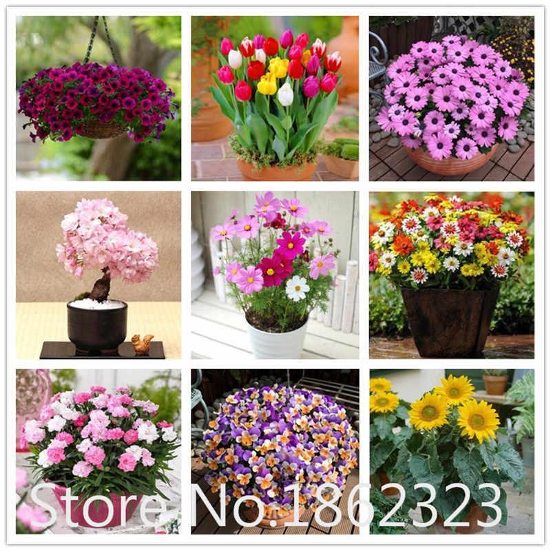 100 PC Bonsai Bunga Bonsai Eksotis Indoor Bunga Matahari Rose Tulip Petunia Bunga Bonsai Planta Dekorasi Natal untuk Rumah
