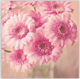 Ροζ Daisy Κέντημα με διαμάντια - Τέχνες, βιοτεχνίες και ράψιμο - Φωτογραφία 1