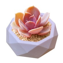 Diamond Shaped Surface Succulent Plant Flower Pot Silicone Mold Gypsum