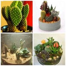 Buy  s Potted Flowers Fleshy Semillas De Flores  online