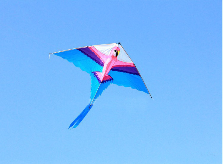 free shipping high quality parrot kite with handle line outdoor flying toy nylon ripstop kite surf sport parachute octopus kite professional stunt kite designs outdoor sport power kite 4 line beach kite with handles flying line string