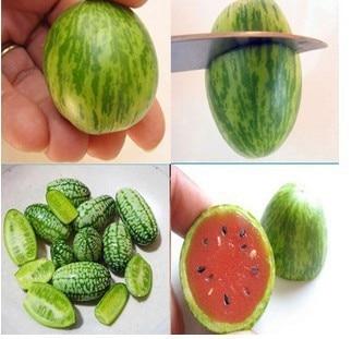 star fruit taste is cucumber a fruit