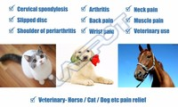 cold laser physiotherapy Horses pain relief veterinary using arthritis treatment