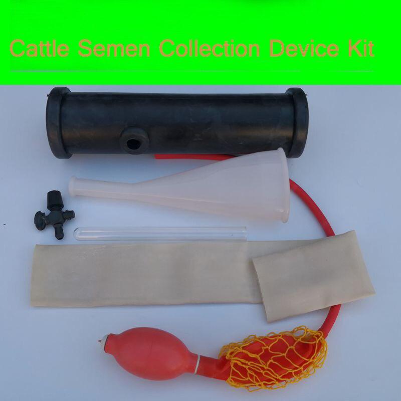 Cattle Semen collection device livestock