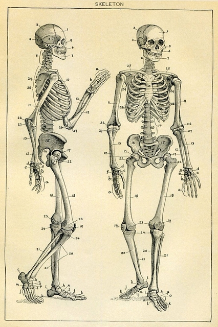 DIY Frame Skeleton Vintage Medical Artwork Poster Fabric Silk Posters And  Prints For Home Decoration