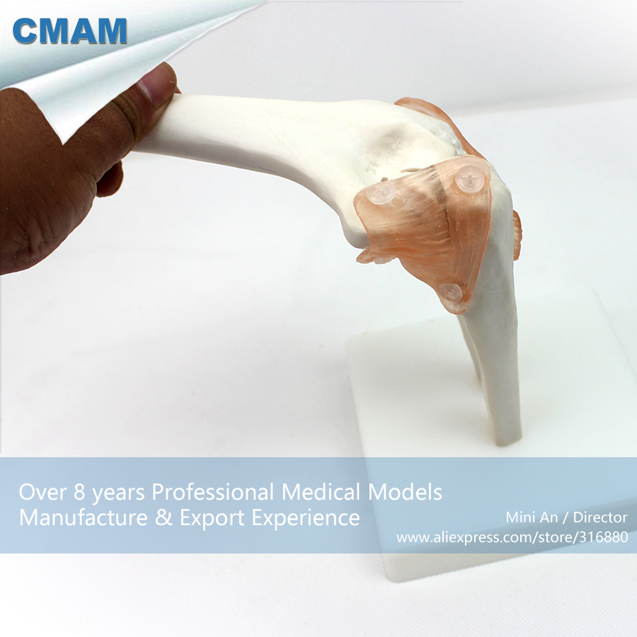 12357 CMAM-JOINT10 Life-Size Elbow Joint ,  Medical Science Educational Teaching Anatomical Models 1 2 life size knee joint anatomical model skeleton human medical anatomy for medical science teaching