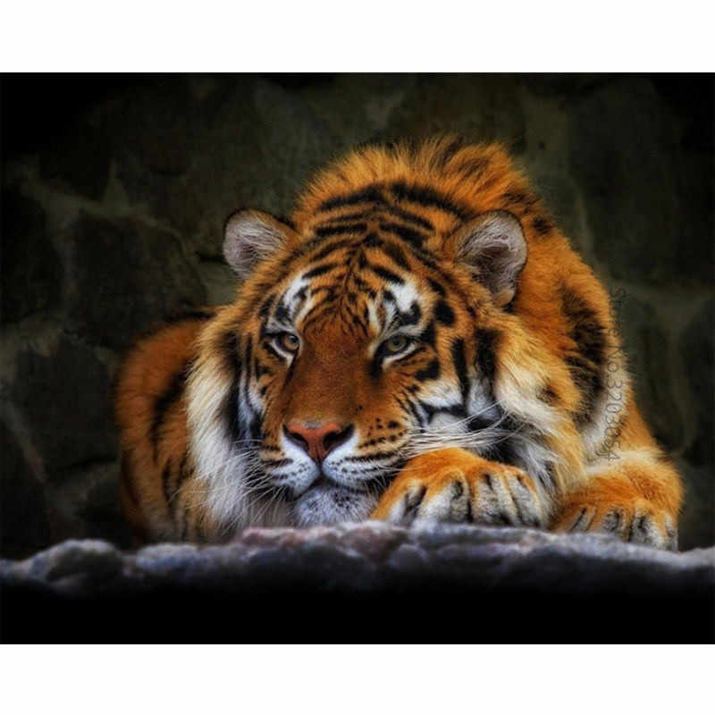 CHUNXIA Framed DIY Painting By Numbers Tiger Acrylic Painting Modern Picture Home Decor For Living Room 40x50cm RA3276