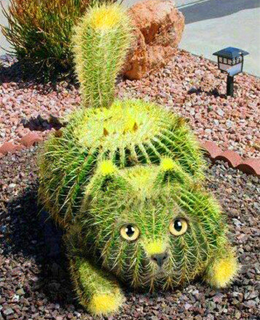 100 Pcs Rare Rainbow Lithops Seed Pseudotruncatella Succulents Raw Stone Cactus Seeds Potted Flowers Fleshy Semillas De Flores