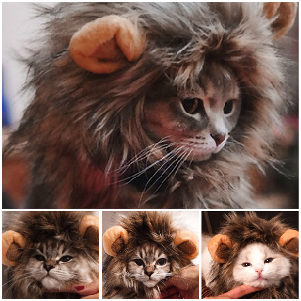 Pet Lion Halloween Costume  3