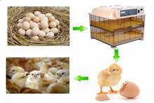 Fast shipping  Automatic Digital poultry egg incubator 96 chicken egg hatching machine Turning chicken gooose