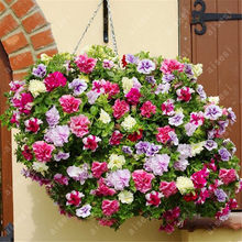 bonsai 100pcs/bag Petunia flower Mix Petunia Hybrida hanging petunia garden Petunia,bonsai plant for home garden(China)