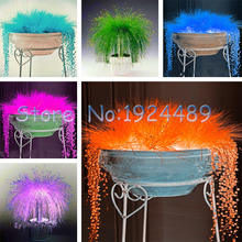 Novelty of 6 different colors of light-emitting Mexico grass seed potted bonsai garden courtyard terrace 200PCS