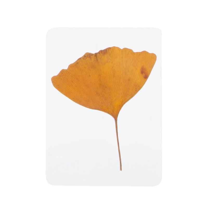 A mistura pressionou os enchimentos do espécime da planta das folhas da flor para a fatura da joia da resina da cola epoxy