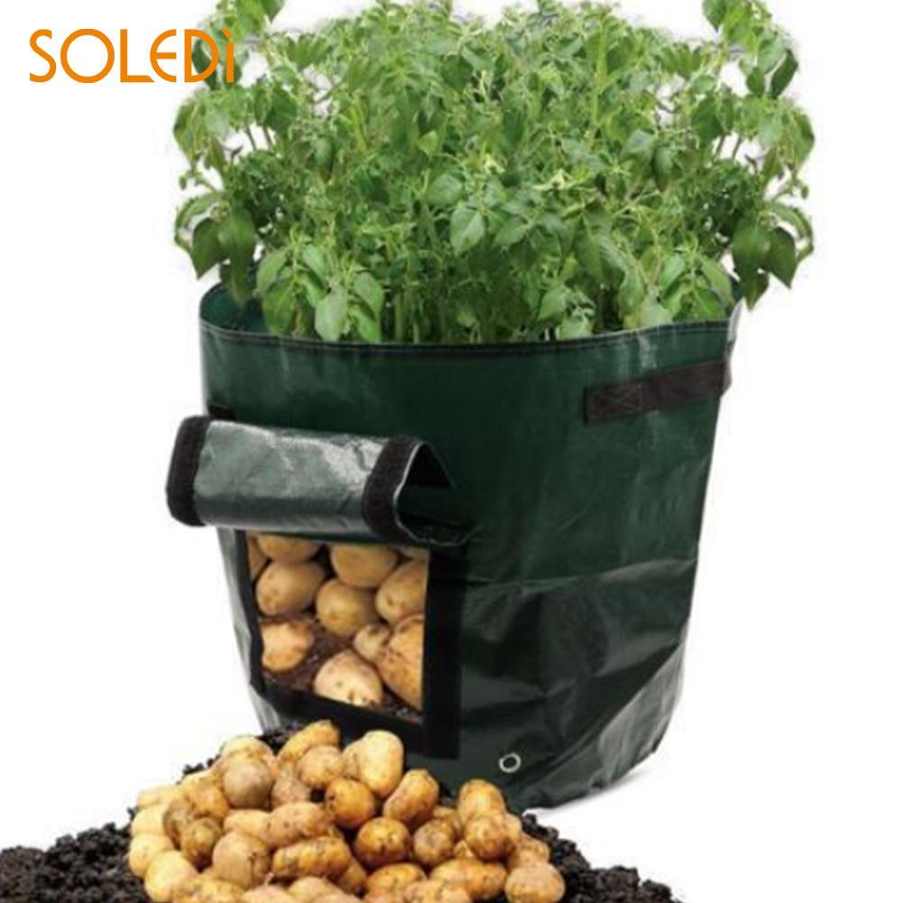 Картофель кашпо, мешки удобный зеленый овощей 34*35*1 см дворе завода расти мешок картофель батат