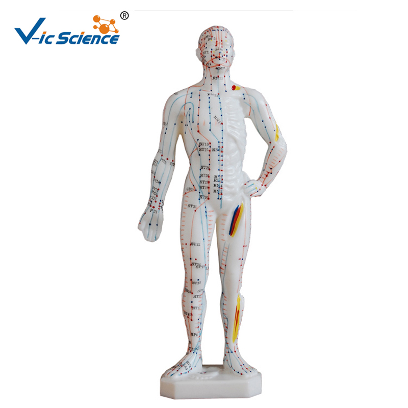Advanced PVC Materials 26CM Human Acupuncture Model