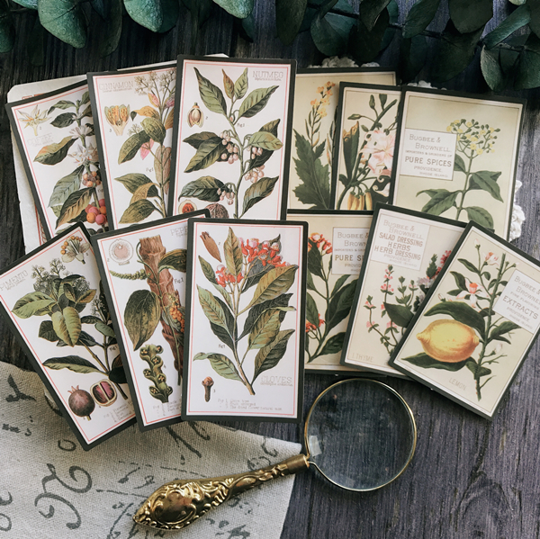 12pcs DIY Handbook Vintage Retro Plant English Atlas TN Notebook Decoration Material Fern Album Diary Sticker