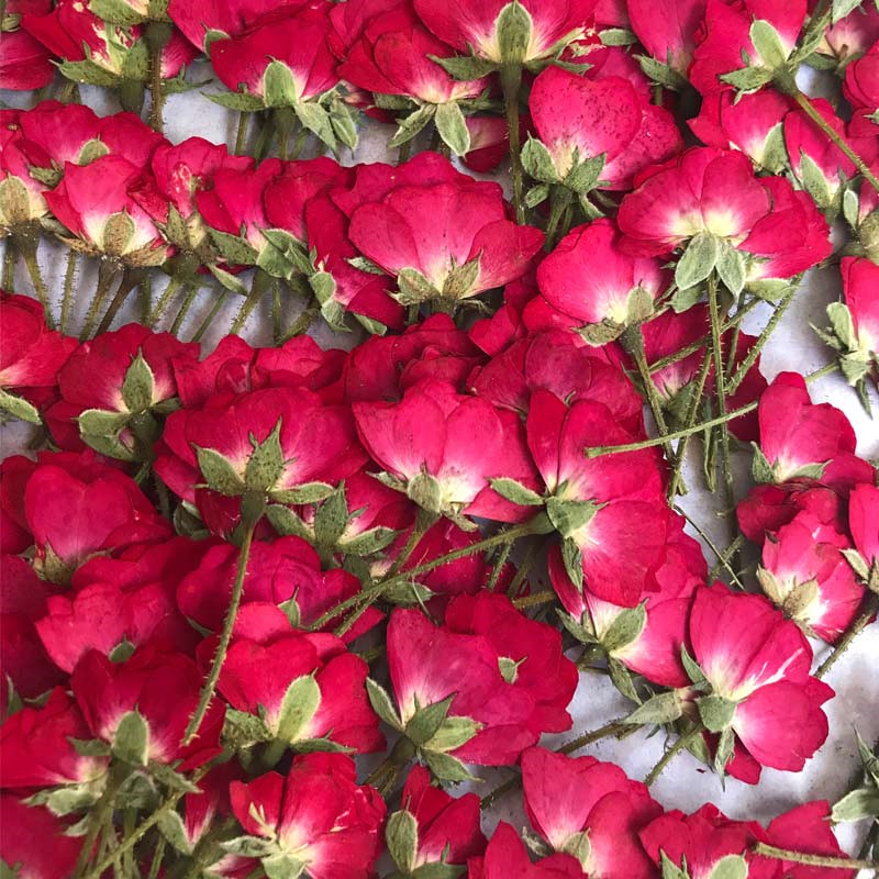 Fleurs séchées bourgeon de roses chinois | Pour peinture de fleur à presse, marque-page, bricolage, marque-page, livraison gratuite, 30 pièces