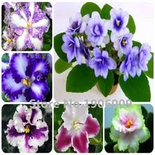 Hot Sale !!! 100 PCS 24 Colors Violet Seeds Garden Plants Violet Flowers Perennial Herb Matthiola Incana Seed