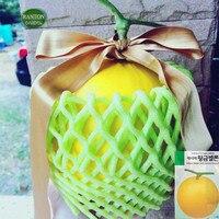 1 Original Pack South Korea Asia Hwang Geum Gold Sweet Melon Hybrid Melon Seeds 10G around 400 Seeds per Pack Heirloom Muskmelon